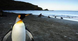 Kralj pingvina