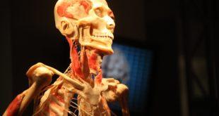 Razotkrivanje tela (Bodies Revealed)