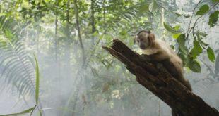 Amazonija 3D