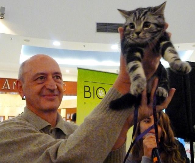 Revija mačaka - mačak Ajfel