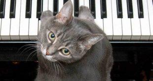 Mačka svira klavir