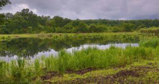 Specijalni rezervat prirode Gornje Podunavlje (foto: wwf.panda.org)