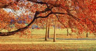 Ada Ciganlija - jesen