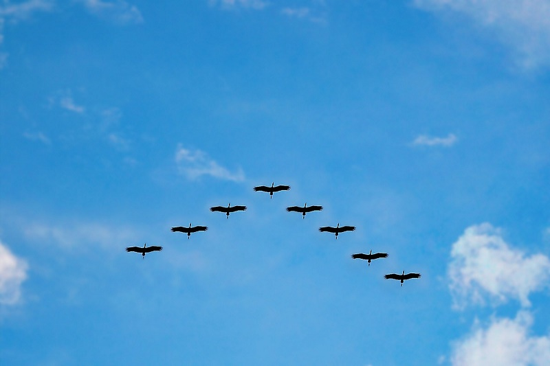 Ptice selice