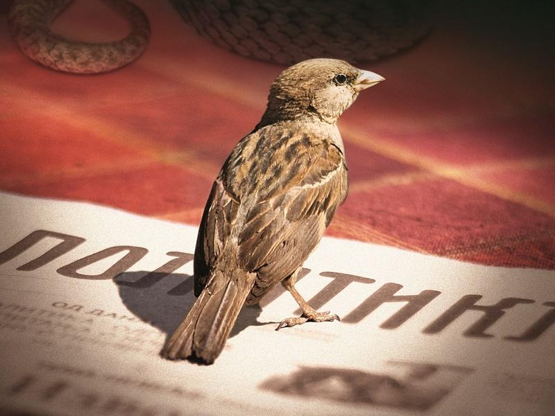Čarobna knjiga: David Albahari - Životinjsko carstvo