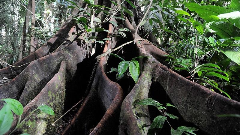 Bioskopi: Bila jednom jedna šuma
