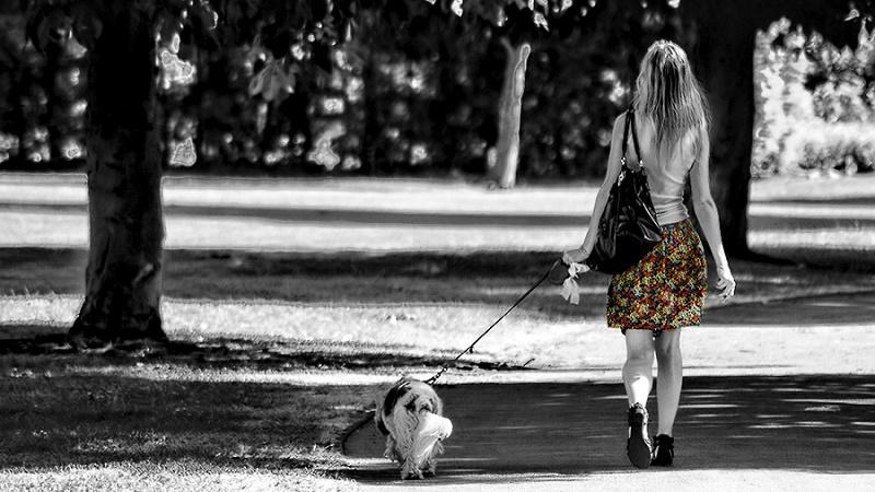 Hodanje po Beogradu