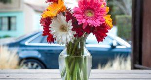 Beograd u bojama cveća