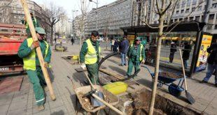 Tokom 2015. biće zasađeno 4.000 stabala