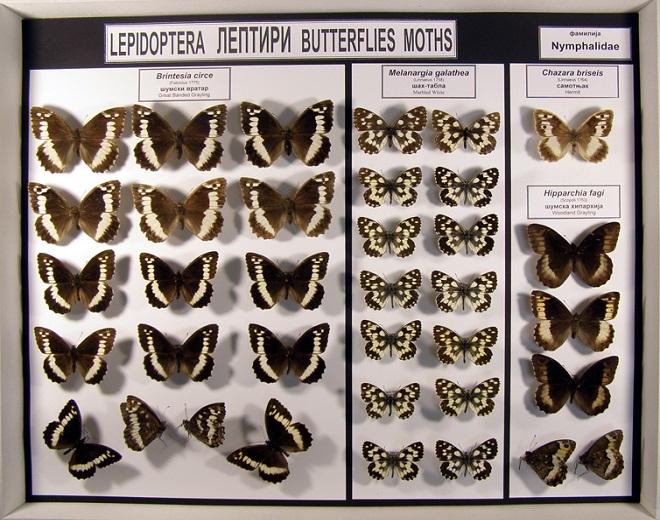 Kroz svet insekata Srbije: leptiri