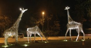 Topčiderska zvezda - Porodica žirafa (autor: Milivoj Pavlović i TAT)