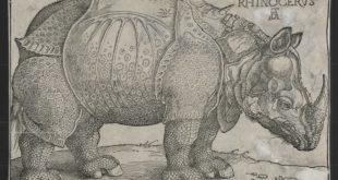 Albreht Direr - Nosorog (1515)