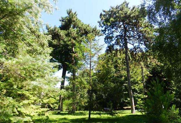 """Botanička bašta """"Jevremovac"""""""