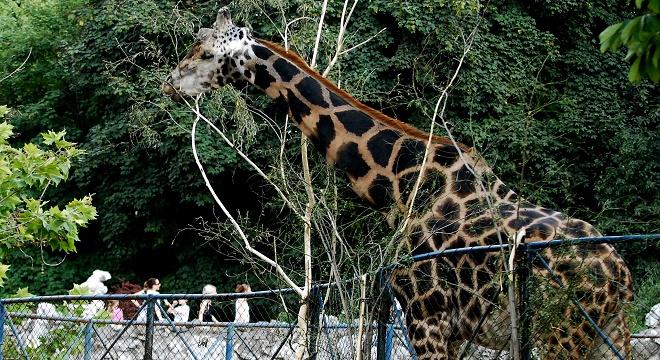 Beogradski zoološki vrt – Vrt dobre nade