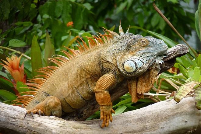 Egzotične životinje u Beogradu