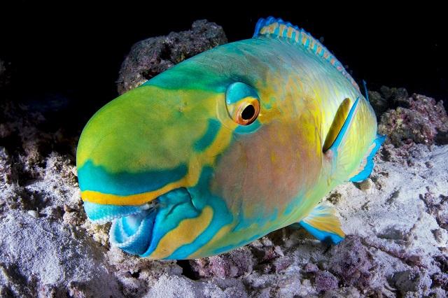 Festival kratkog podvodnog filma: Nečujno 3