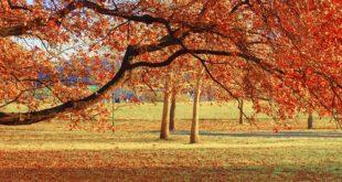 Posmatranje jesenjeg lišća u Beogradu