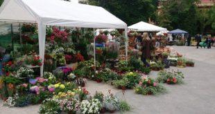 """Prodajna izložba """"Sunce i cveće"""" u parku Manjež"""