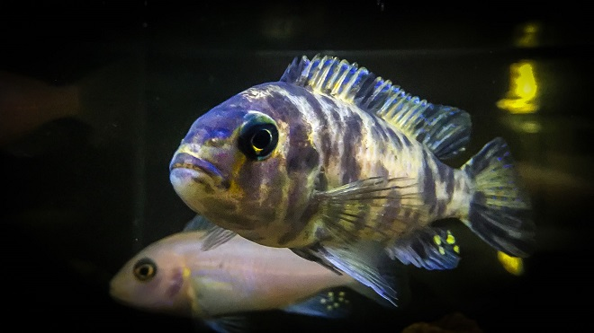 Javni akvarijum i tropikarijum Beograd