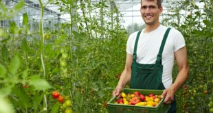 Organsko i zdravo, za goste volontere (foto: Shutterstock)