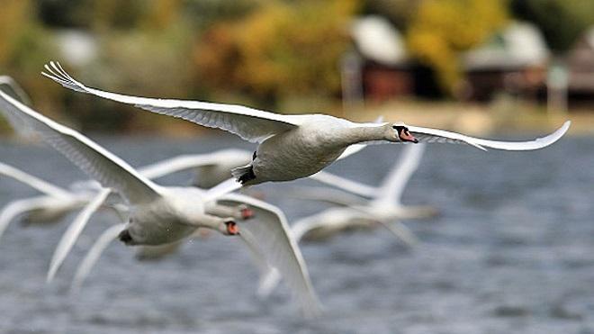 Ptice Beograda