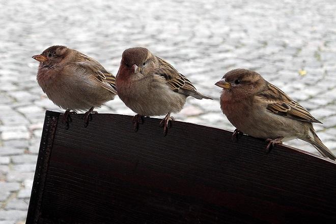 Nahranite ptice