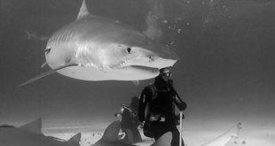 Međunarodni festival podvodnog filma - filmovi iz 2015. i 2016. godine
