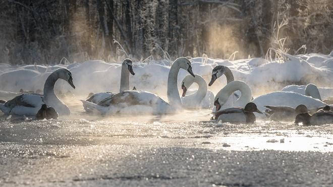 ARS: Pokazna vežba spasavanja životinja sa leda (foto: Shutterstock)