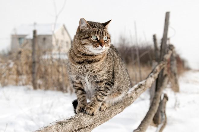 Kako pomoći psima i mačkama lutalicama u ledenim danima (foto: Shutterstock)