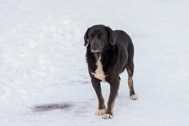 Kako pomoći psima i mačkama lutalicama u ledenim danima