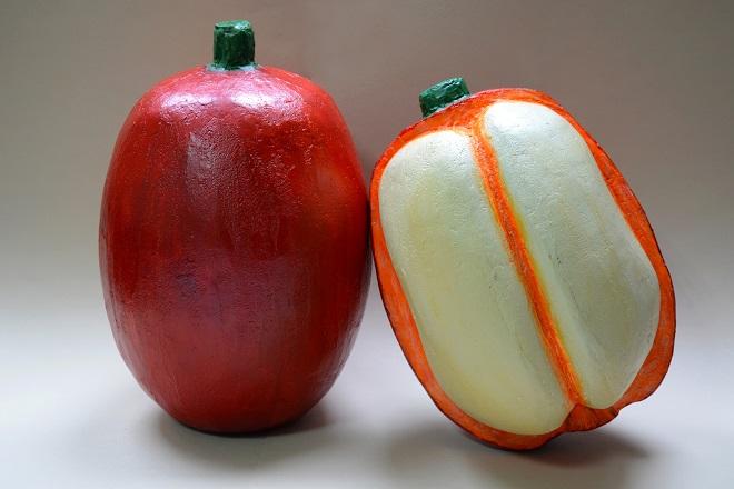 Modeli ploda i otvorenog ploda kafe sa semenom