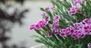 """Izložba cveća u Manježu """"Sunce i cveće"""""""