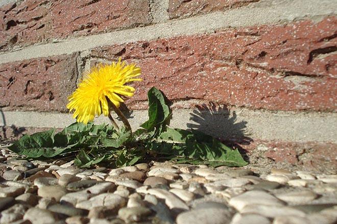 Proleće stiže u Beograd