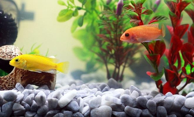 Sajam akvaristike i teraristike