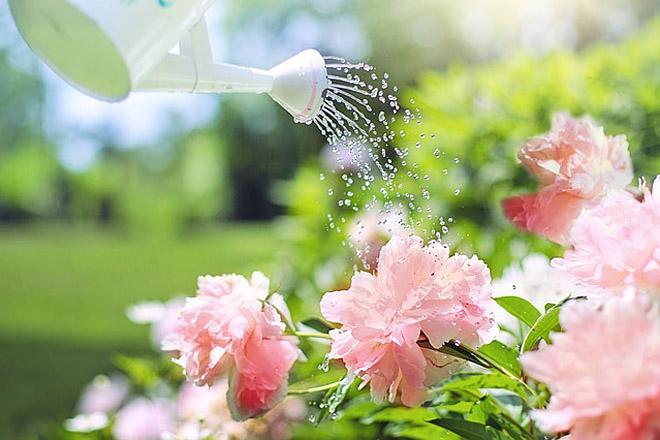 Stigle je leto, više vode svima je neophodno