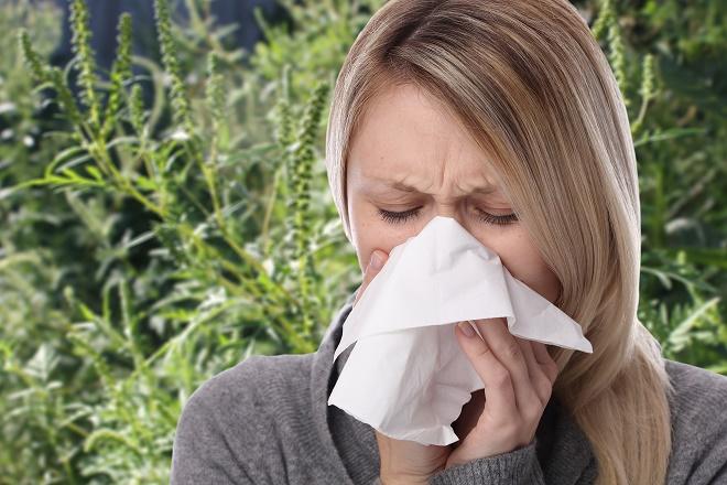 Ambrozija u Beogradu - alergije (foto: Shutterstock)