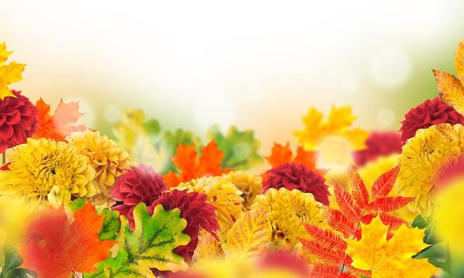"Sajam cveća ""Beogradska jesen"" (foto: Shutterstock)"