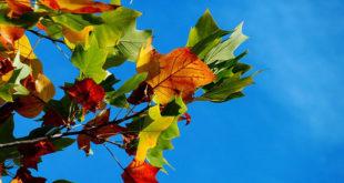 Jesenji dani dolaze