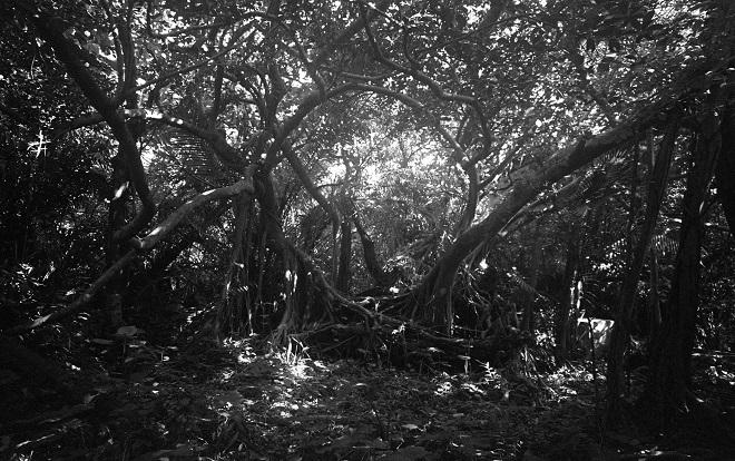 Izložbe: Osami Arikata - fotografije (Galerija Grafičkog kolektiva)