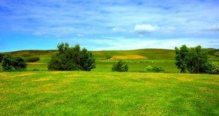 Lepote kućnog zelenila (neagrarna priča); foto: Shutterstock - Škotska