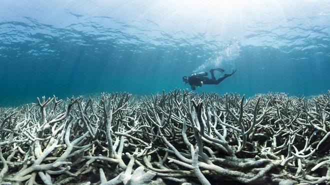 Green Fest 2017 - U potrazi za koralom