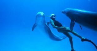 Bioskopski repertoari: Čovek delfin