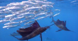 21. Međunarodni festival podvodnog filma