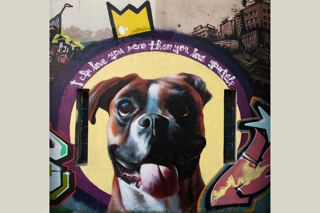 Oslikavanje prihvatilišta za životinje u BIGZ-u (rad i foto: Artez)
