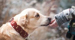 Podsećanje: Kućni ljubimci ne vole buku!