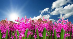 Proleće u Beogradu
