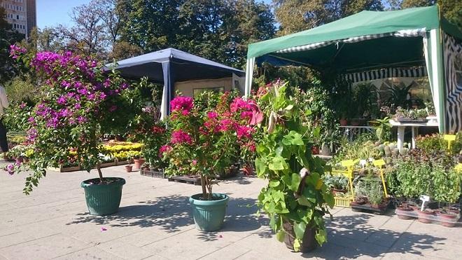 Prodajna izložba Sunce i cveće u parku Manjež