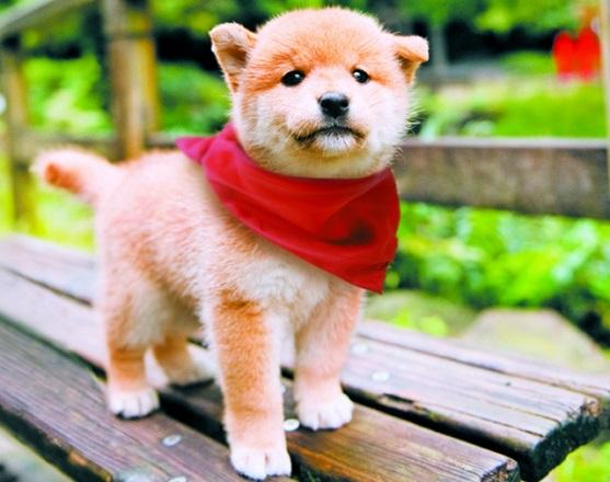 Mamešiba nemirno štene (foto: Mameshiba Production Committee)