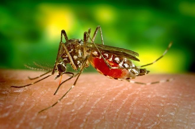 Suzbijanje komaraca i krpelja