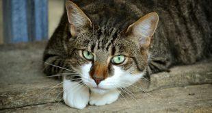 Izložba mačaka: Mačke u umetnosti